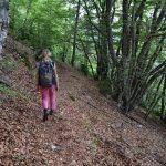 Forêt sous la barre des Dourbes