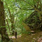 Bois de Charbonnière