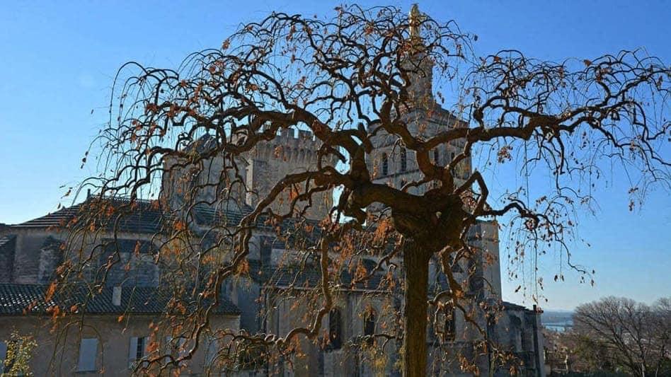 Avignon intra muros