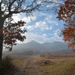 vigne Versant Nord