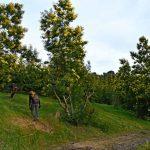 Massif du Mimosa