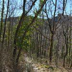 Forêt de la Font du Pommier