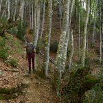 Forêt sous le Mont Aiguilles