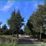 Forêt des Cèdres